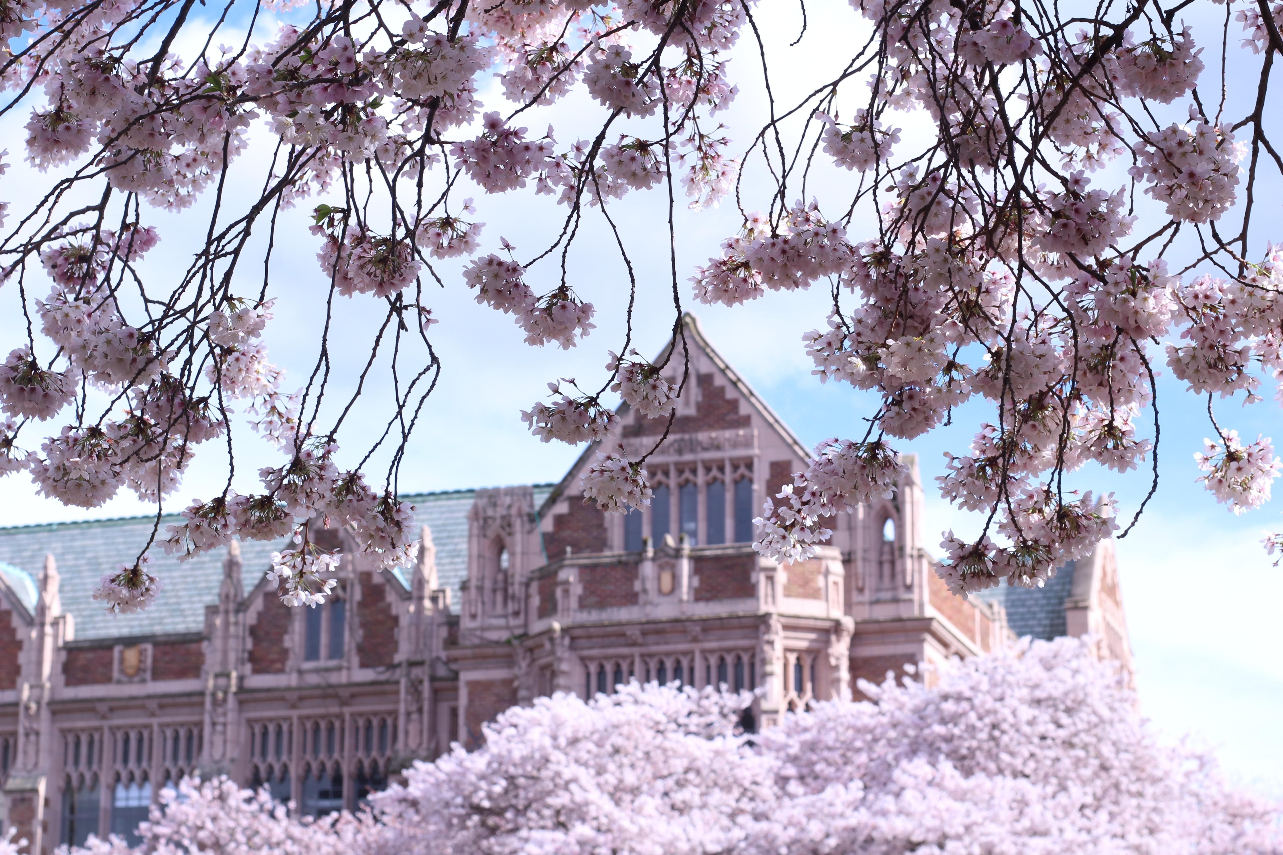 Can I get into the university of washington?